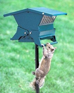 heritage farms original absolute ii squirrel proof bird feeder - Squirrel Proof Bird Feeders