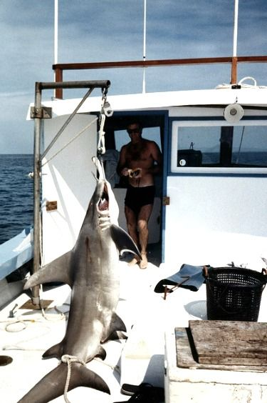 224 best images about shark fishing on pinterest blue for Shark fishing in florida