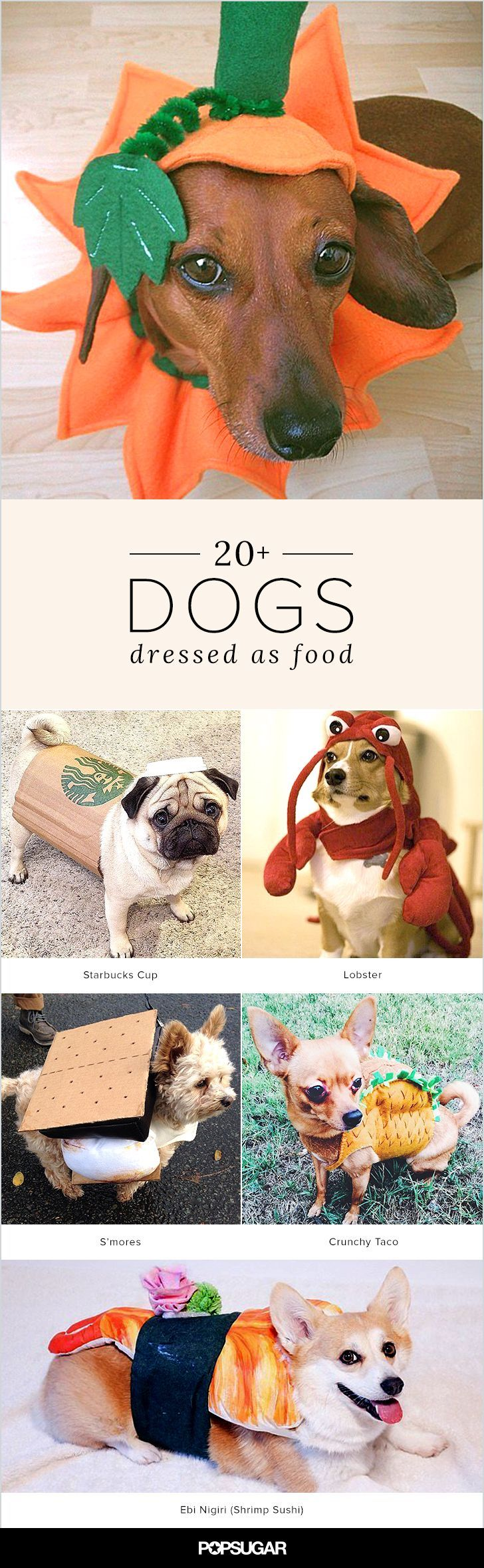 Dogs in Halloween costumes are pretty darn adorable as is; dogs dressed as food are in a league of their own. Side effects of perusing this roundup may include: uncontrollable smiling, laughter, happiness, and in some extreme cases, tears of joy.