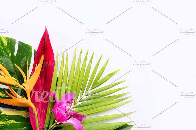 tropical flowers  by Trefilova Anna on @creativemarket