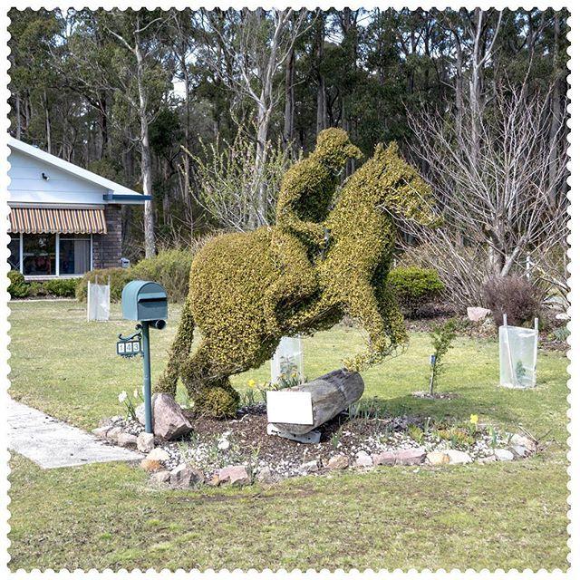 First past the post in Railton, 7305.  #AustraliaConnected, #Australia, #Tasmania, #Railton, #Topiary, #postcode7305, #LetterBox, #HorseRacing.