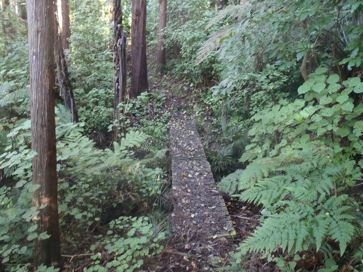 A bridge over the stream in the Whispering Woods track