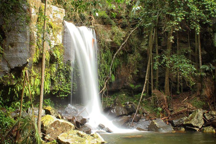 Majestic Curtis Falls - Mt Tamborine, Australia [5184 × 3456] [oc]