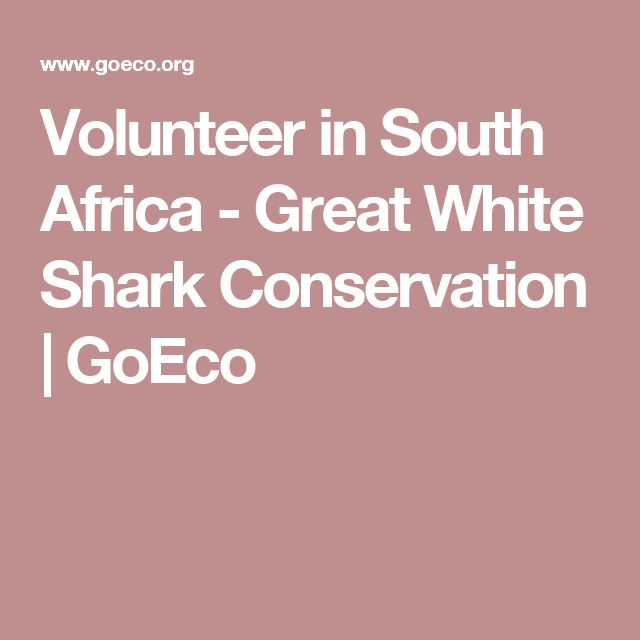 Volunteer in South Africa - Great White Shark Conservation | GoEco