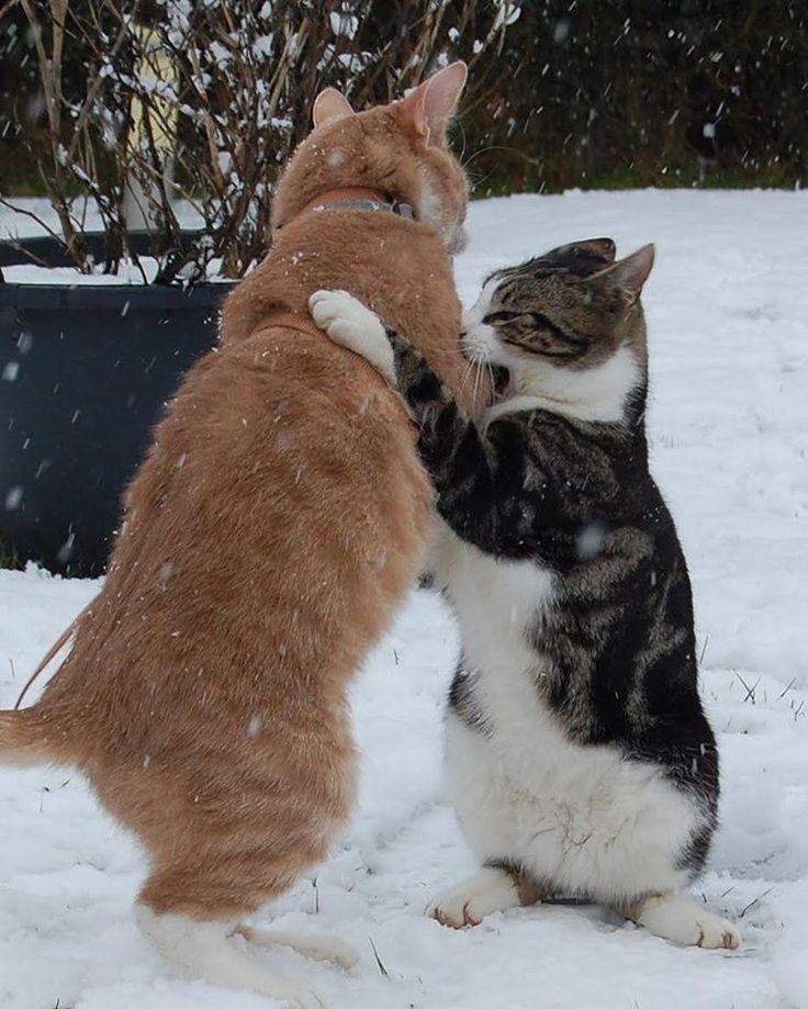 """""""#cat #cats"""""""