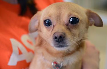 We have great news: Nearly 700 cats and dogs rescued by the ASPCA in January from THE HAVEN IN RAEFORD, NC, are ready to find loving homes. The ASPCA will host a three-day adoption event in Sanford, North Carolina to find homes for these adorable pets, and we hope you'll consider adopting!