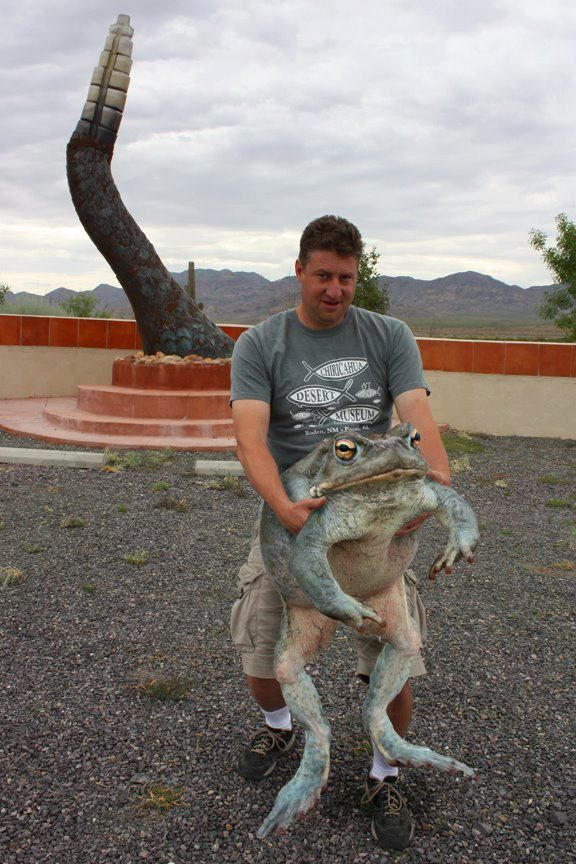 The discovery of this giant Sonoran Desert Toad yesterday outside the Chiricahua…