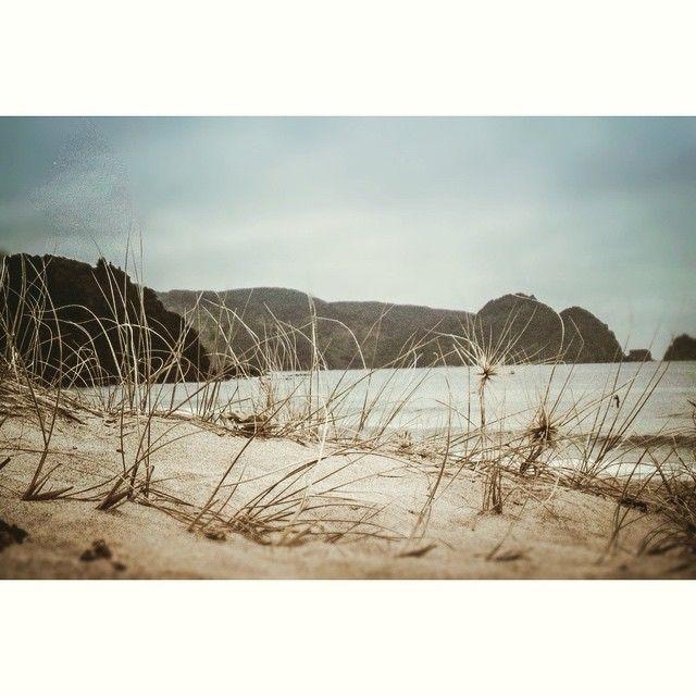 """Even the grey mornings are beautiful... #Tairua #coromandel #newzealand #neverendingsummer #nature_addict #neverstopexploring #light #livefolk #landscape_captures #landscape #lifeofadventure #morning #beach #VSCO #VSCOcam #vscoedit #visualsoflife #thecreativephotos #vsconature #vscopure #aotearoa #summer #surf #passionpassport #featuremeinstagood #wanderlust"" Photo taken by @sophie_hamer on Instagram, pinned via the InstaPin iOS App! http://www.instapinapp.com (03/07/2015)"