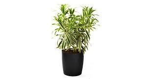 Where To Buy Indoor Plants,  https://www.behance.net/ajizagomes39ed  Gift plant delivery in a special means always adds value to the gift and also will certainly bring a smile to your loved one's face.