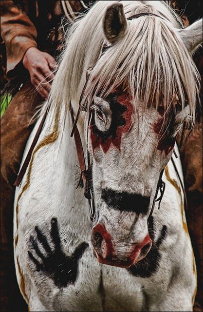 The Indian war horse was highly regarded by its American Indian owner, who often honored and protected his war horse by painting tribal symbols upon the animal's body.