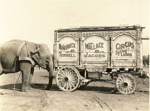 vintage circus wagon photo