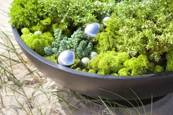 100 best flori de gradina arbusti ornamentali si flori de for Arbusti ornamentali