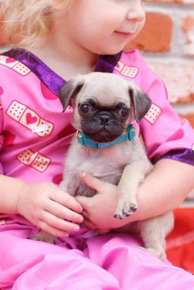 Check Out Our Site For Additional Information On Black Pugs It