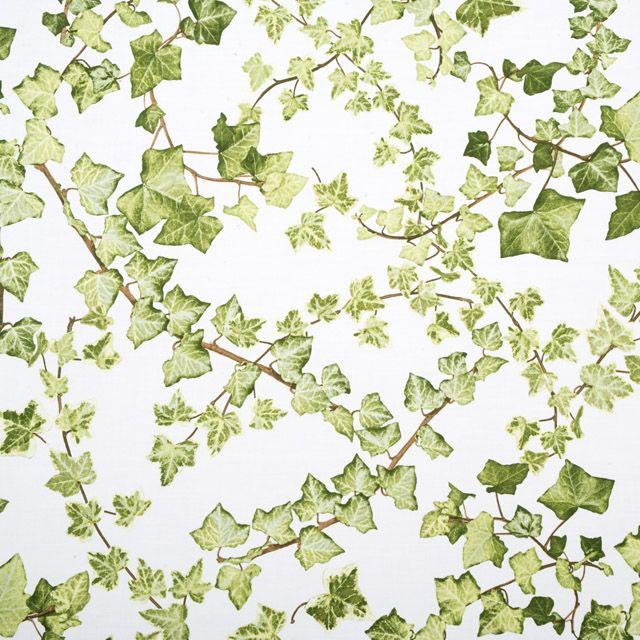 Murgröna - Murgröna metervara