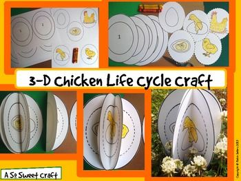 Life Cycle of a Chicken Craftivity by Robin Sellers