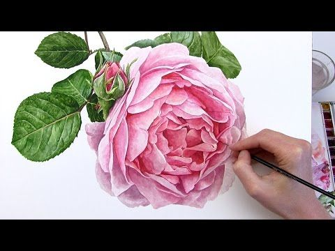 How to paint realistic botanical rose in watercolour with Anna Mason - YouTube