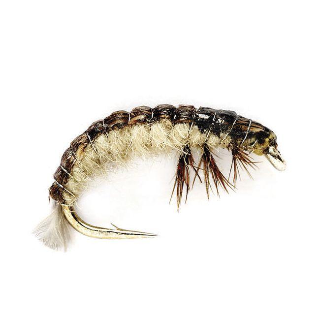 Oliver Edward's Hydrophyche Larva