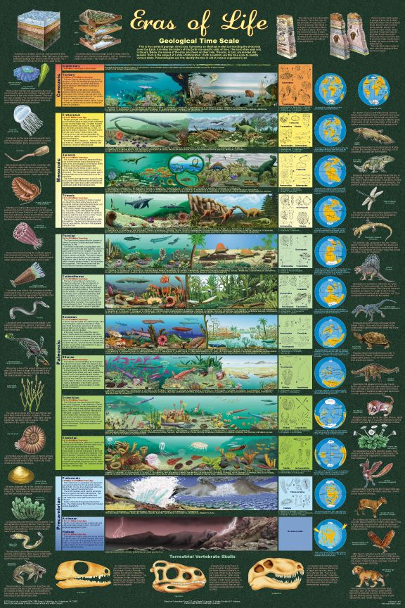 This magnificently illustrated geological time visualization provides an extensive exploration of life as it existed in various periods.  Each period