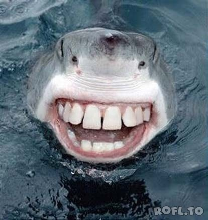 Funny Shark Teeth - Funny Picture, Photo - ROFL.TO