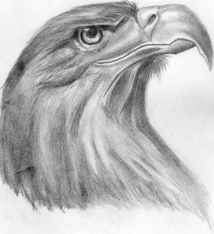 eagle head by wintha traditional art drawings animals 2012 2015 wintha ...