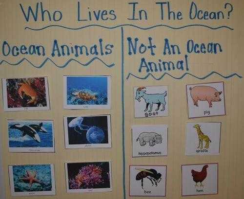 Diving Into Ocean Activities | Scholastic.com