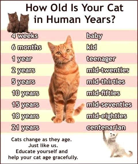 How Old Is Your Cat in Human Years? Good to know, my cat is
