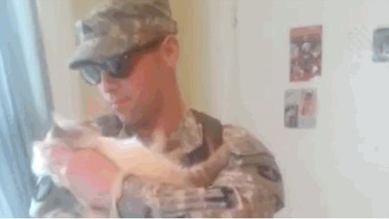 Watch an Excited Cat Welcome Home a Soldier  Cat Reunites With Soldier