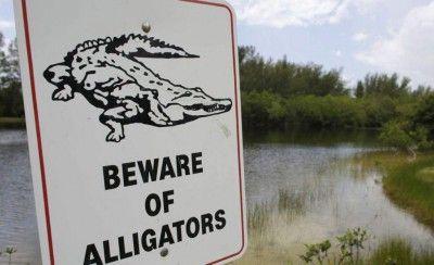 Un cocodrilo ataca a un turista mientras orinaba en una laguna de Cancún