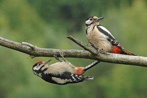 Oiseau De Nos Jardins France