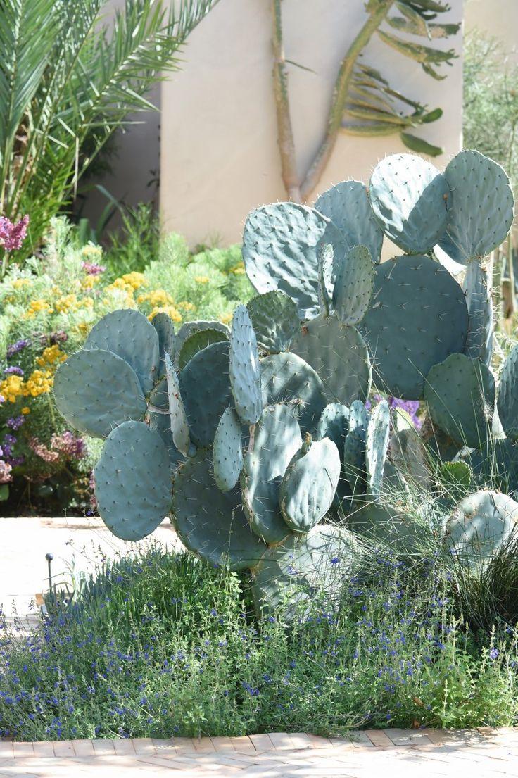 N°6 : Cactus. Cactus, plantes et arbres du jardin proviennent de pépinières marocaines et siciliennes. Du fait de la complexité d'accès au lieu, une véritable expédition a dû être organisée pour les installer. Leur transport s'est effectué de nuit, au moyen de chariots tirés par des ânes et des chevaux...