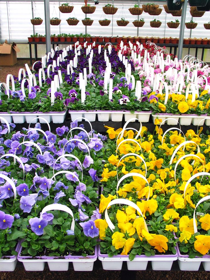 Annuals and Hanging Baskets. Johnson's Gardens, Cedarburg, WI