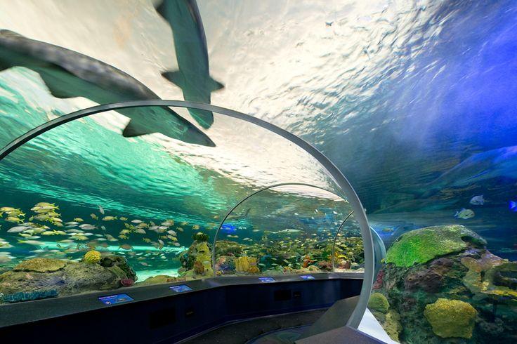 Ripley's Aquarium of Canada #lighting #design