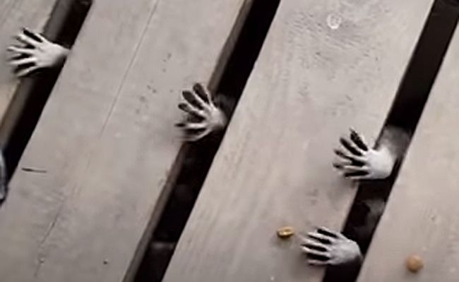 Daily Cute: Spooky Raccoon Hands Snatch Treats   Care2 Healthy Living