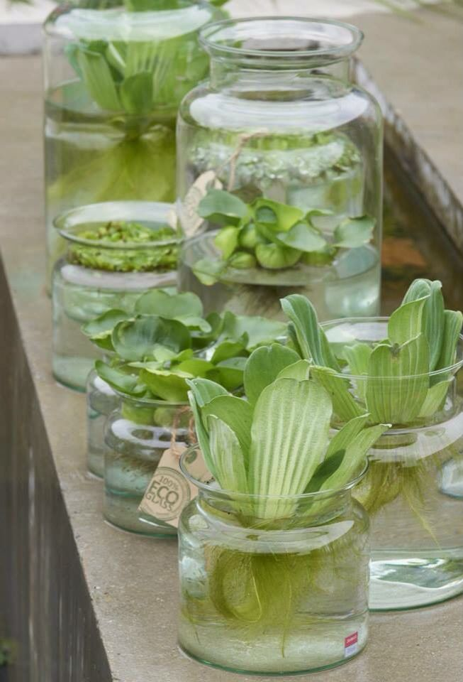 Glazen (Jodeco Glass) mini vijvers. Helemaal de trend van dit moment, zomer 2015. Met waterplanten van waterplantenkwekerij R. Moerings in het florist magazine DE POOK.