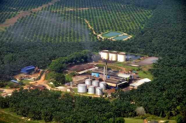 Where Does Palm Oil Come From? All about Palm Oil Production