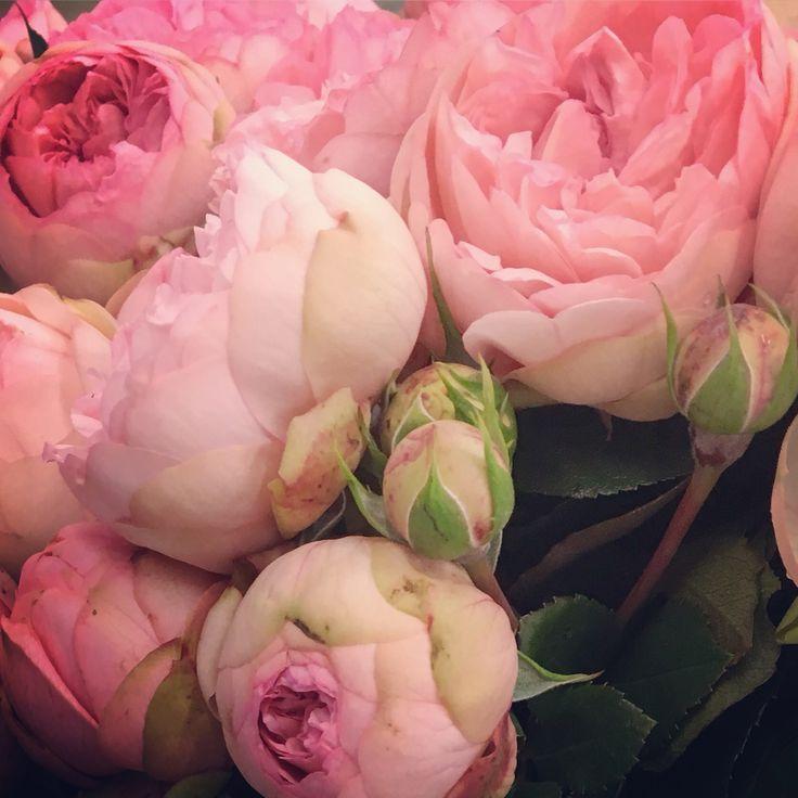 Bridal piano garden roses