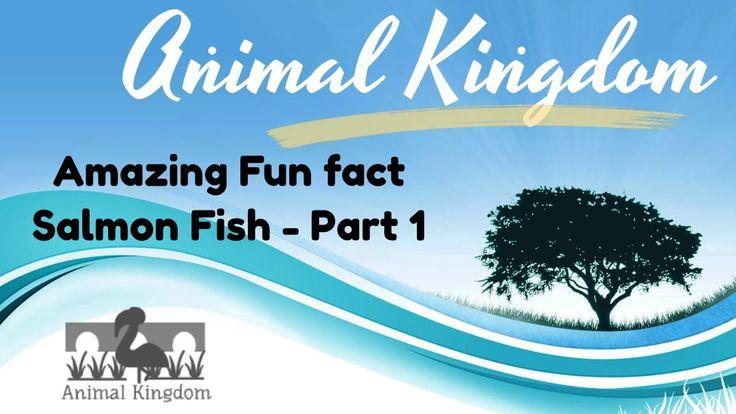Animal Kingdom - Amazing Fun Fact about Salmon Fish  – Part 1