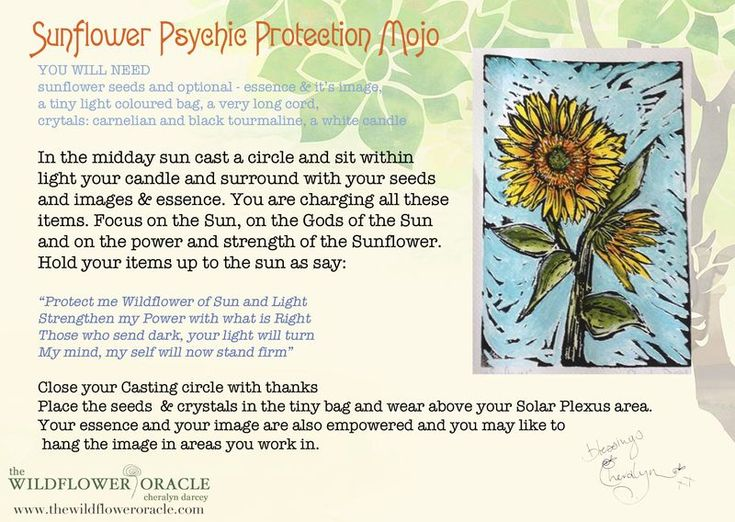 Sunflower Psychic Attack Protection Wildflower Spell Postcard Psychic Attack Protection Psychic Attack Flower Essences