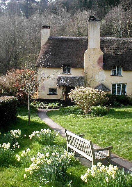 Daffodil cottage, Selworthy UK