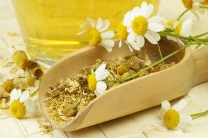 Chamomile is a tried and true stress destroyer; try our calming Chamomile Lotion #destress
