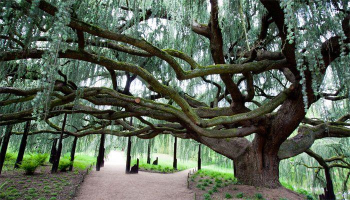 """Sur quelle branche se sont posées les votes pour """" l'Arbre de l'Année"""" 2015 http://www.blog-habitat-durable.com/sur-quelle-branche-se-sont-posees-les-votes-pour-larbre-de-lannee-2015/"""