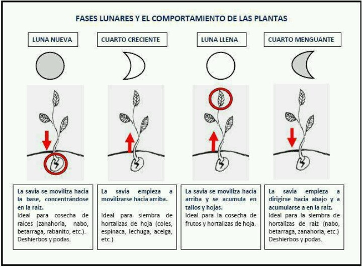 @bioguia: The Plant, The Garden, Comportamiento De, Las Fase, For, Moon, Of The, Phase, Fase Lunar
