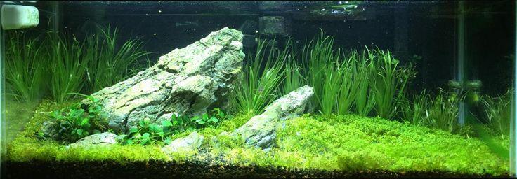 фото дизайна аквариума на 40 литров