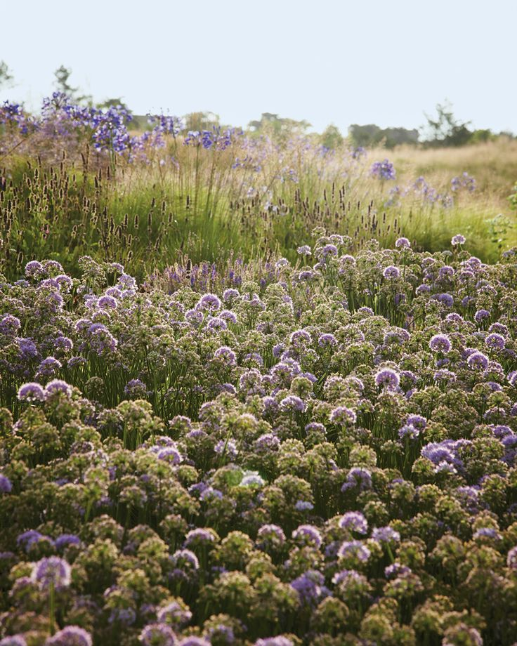 A wilder way gardens nature and photographs for Planting design piet oudolf
