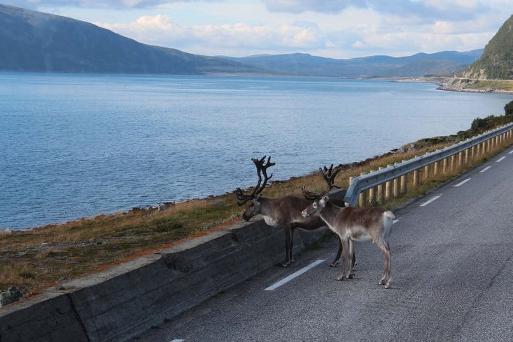 Lofoten Norwegen Rundreise durch Skandinavien Foto: Julia Gleisenberger