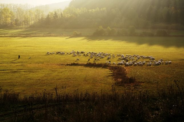 Dobré ráno ovečky!