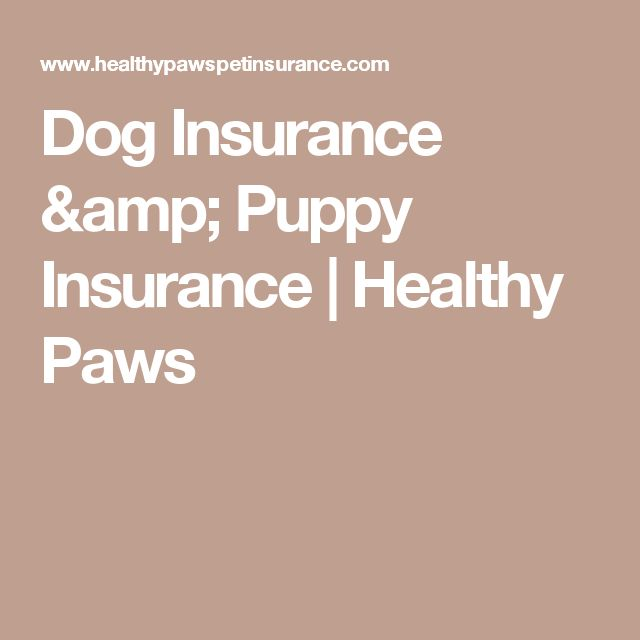 Dog Insurance & Puppy Insurance | Healthy Paws