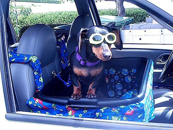 DIY Front Seat Dog Car Seat – Caitlin Was Here