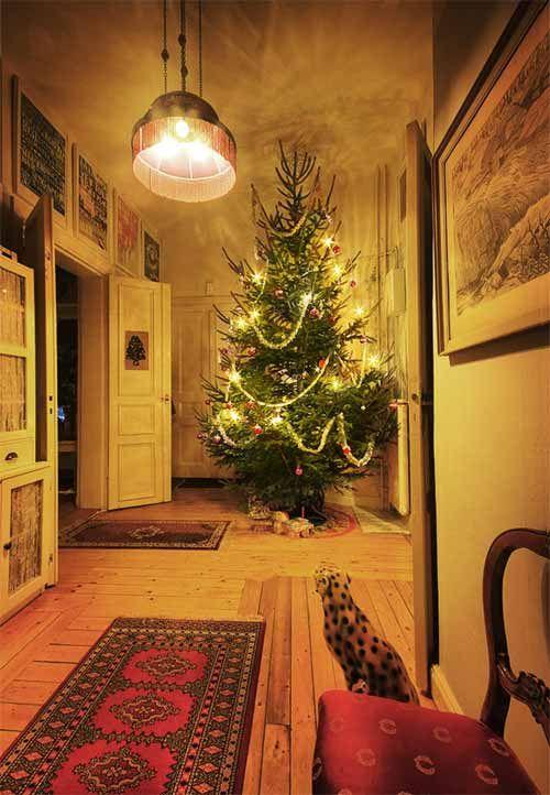 Best 25+ Christmas Tree Photography Ideas On Pinterest | Nikon Camera Tips,  Photoshop Editing Tutorials And Photography 101