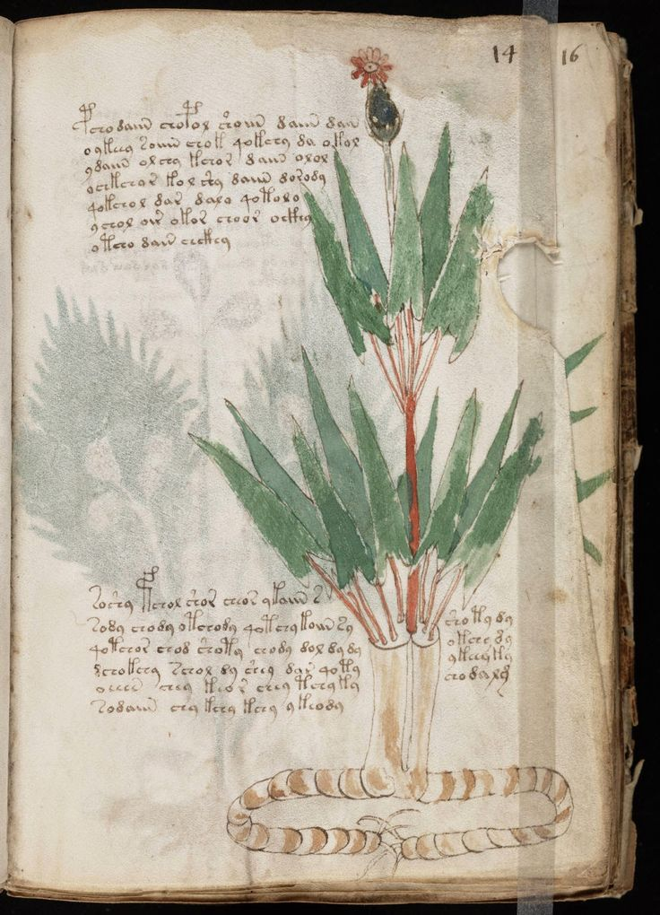 Le Miroir Alchimique: ANONYME Manuscrit Voynich (vers 1420 ?).